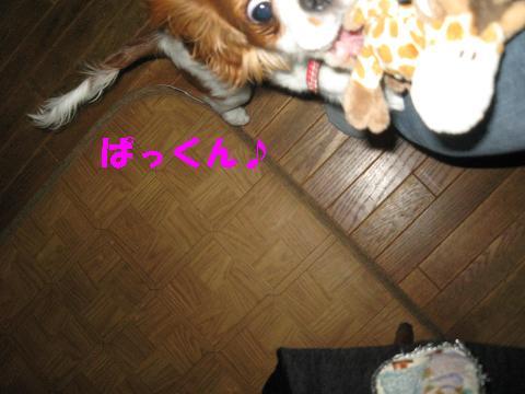 IMG_0136-2.jpg