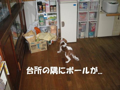 IMG_0141-2.jpg