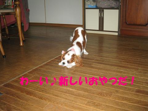 IMG_0157-2.jpg
