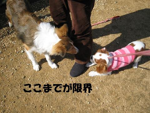 IMG_0237-2.jpg