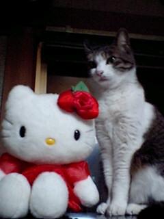 みーやキティ