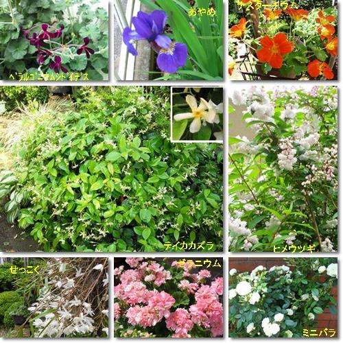 5月下旬の花