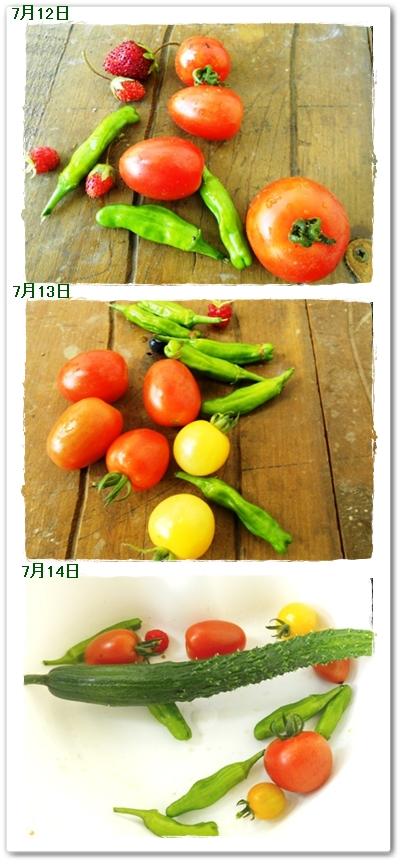 7月12日からの収穫