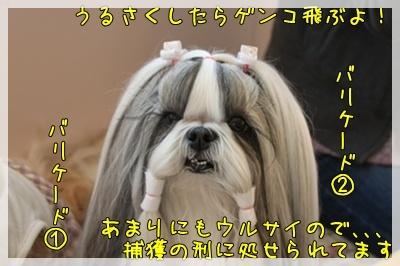 2011_0424_153346AA.jpg