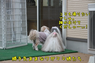 2011_0424_162942AA.jpg