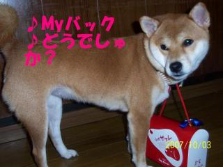 小犬クッキー2
