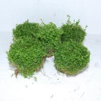 ニューパール鉢2