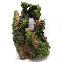 国産流木(上物)22