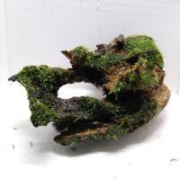 国産流木(上物)2