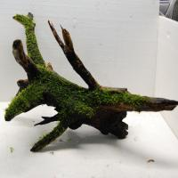 国産流木(上物)3