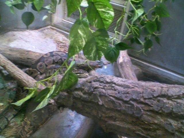 爬虫類は俺的メイン