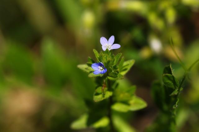 小さい花なので、なかなか気づいてもらえないかな?