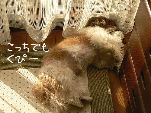 またまた寝