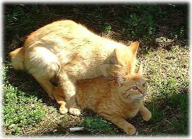 000cats.jpg