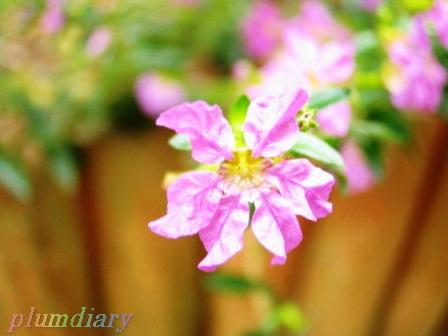 5㎜ほどの小さなお花♪