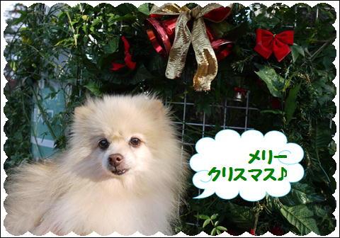 メリークリスマス2011
