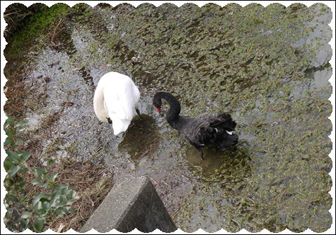 フラワーセンター201202 ①