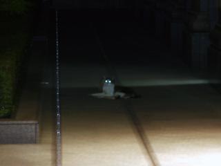 ネコ,猫,ねこ,Cat