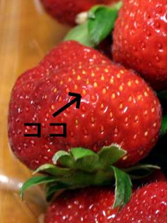 いちご,イチゴ,苺,Strawberry
