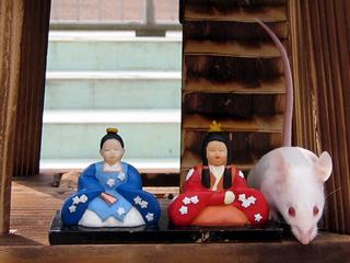 はつかねずみ,ハツカネズミ,house mouse