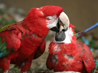 オウム,インコ,おうむ,いんこ,Parrot,Parakeet