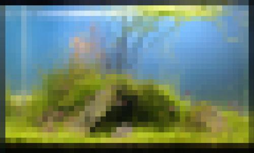 レイアウト画像-2