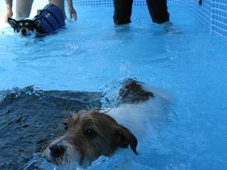 シュウト初泳ぎ02