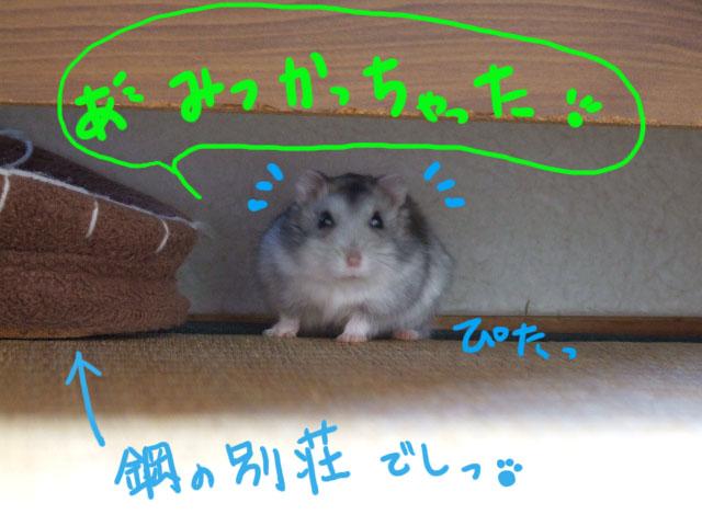 DSCF3708a.jpg