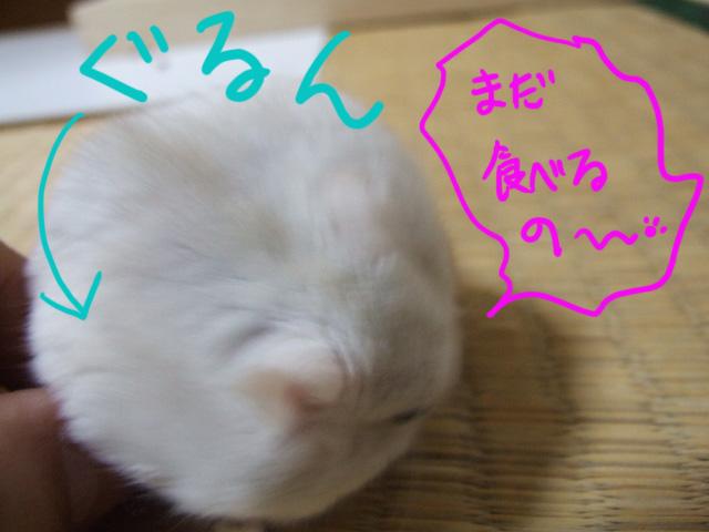 DSCF4110a.jpg