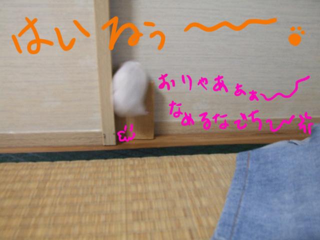 DSCF4160a.jpg