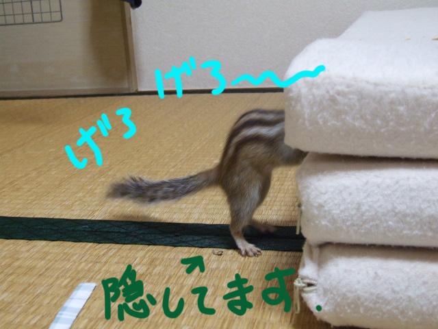 DSCF6702a.jpg