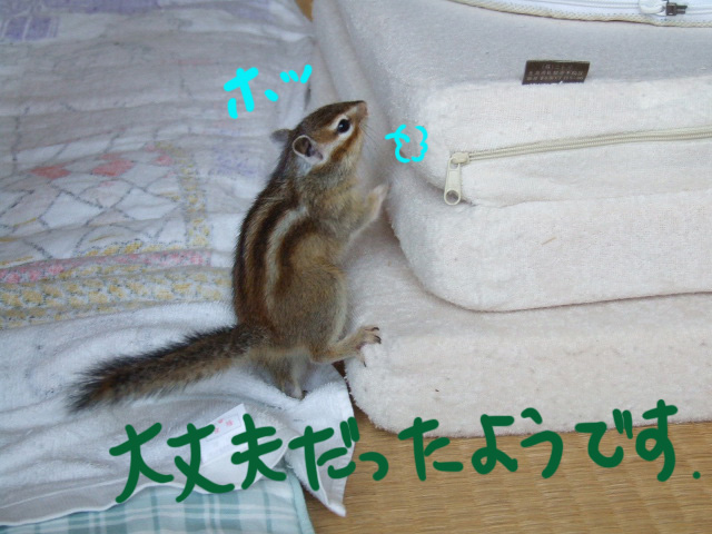 DSCF7027a.jpg