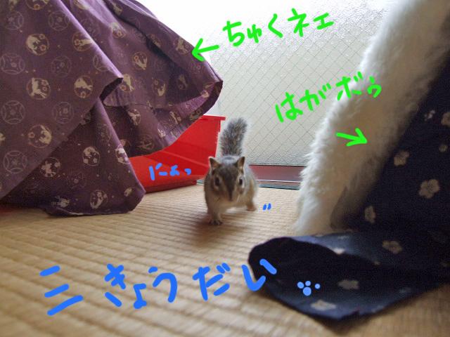 DSCF9227a.jpg