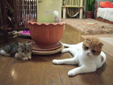 2007_0605okinawa0011.jpg