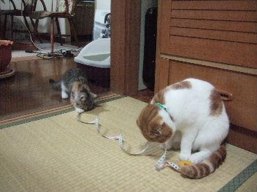 2007_0620okinawa0059.jpg