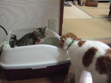 2007_0620okinawa0067.jpg