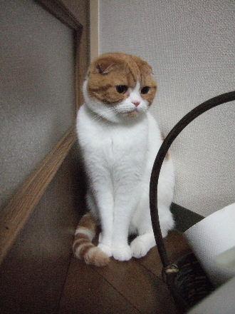 2007_0620okinawa0071.jpg