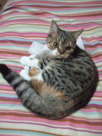 2007_1020okinawa0341.jpg