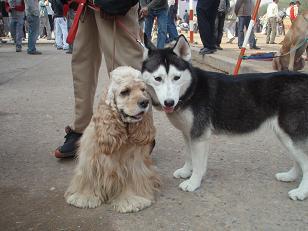 dog show2