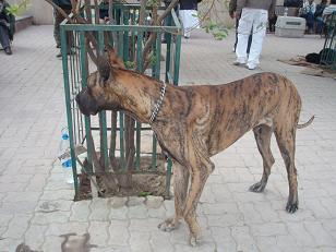 dog show3