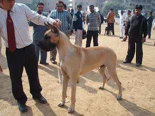 dog show5
