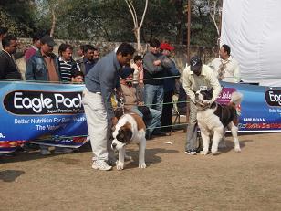 dog show9