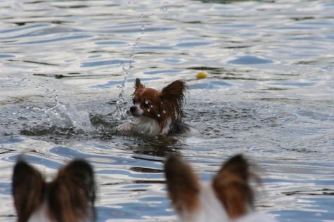 そして溺れ・・・