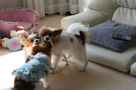 遊ぶ、ルビ、サファ、エミュ