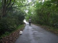 別荘地散歩
