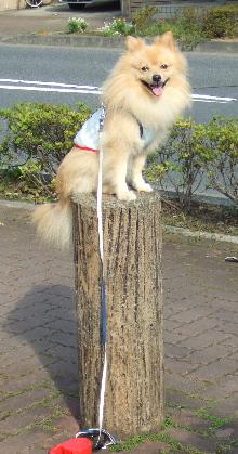 レオ円柱に乗る!