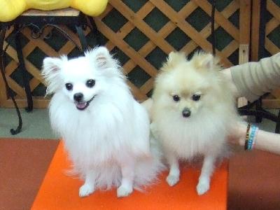 ももちゃん(左)姫ちゃん(右)