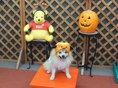 かぼちゃ帽子1
