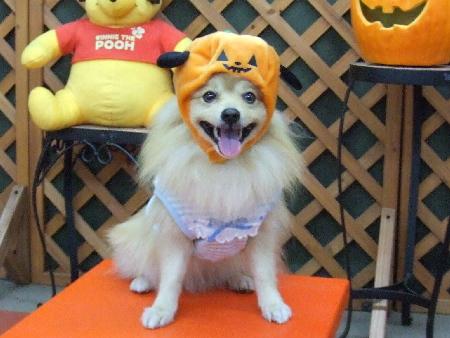 かぼちゃ帽子3