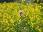 菜の花の中で飛んでる